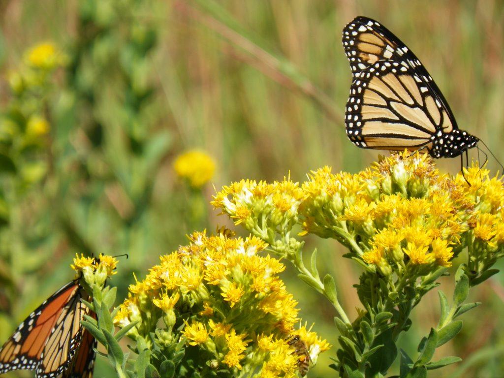 Pollinator promo photo