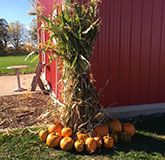 Pumpkins and Barn at Fall Festival