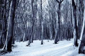 cold-snow-nature-forest-large-2